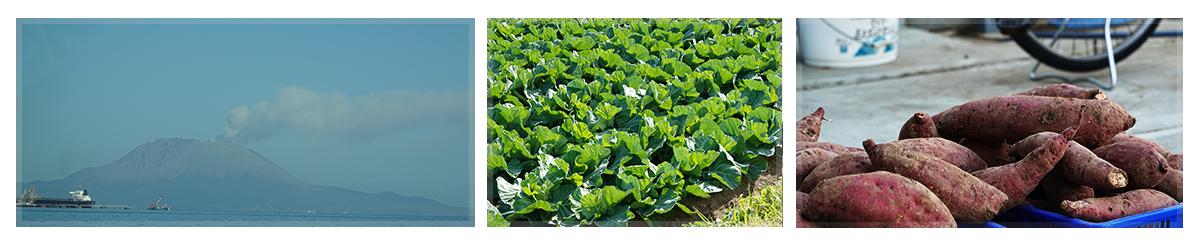 鹿児島・指宿の生きた野菜をみなさまへ